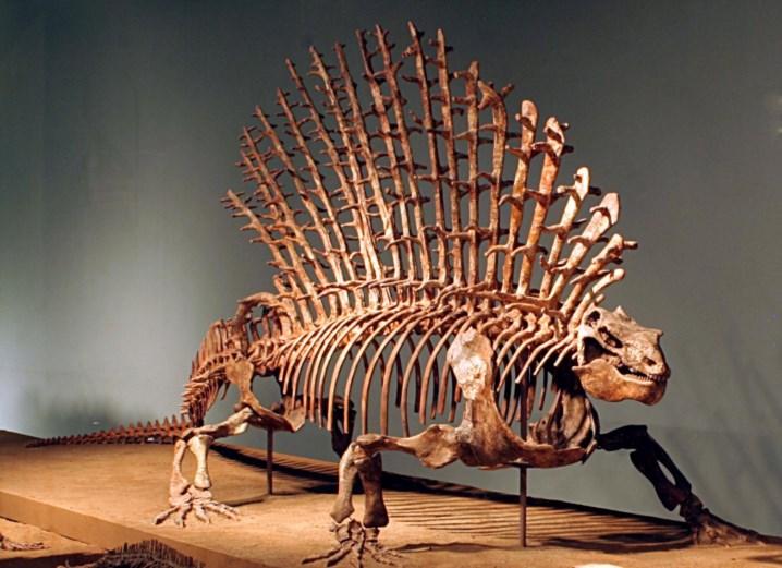 Resultado de imagem para Antigos fósseis ajudam-nos a perceber a evolução da coluna nos mamíferos