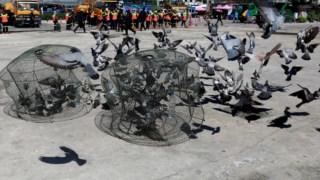 Pombos são um problema de saúde pública na Tailândia