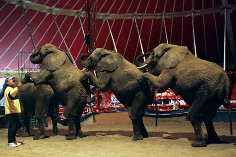 Resultado de imagem para animais em circos