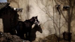 Um burro na província de Gansu, China