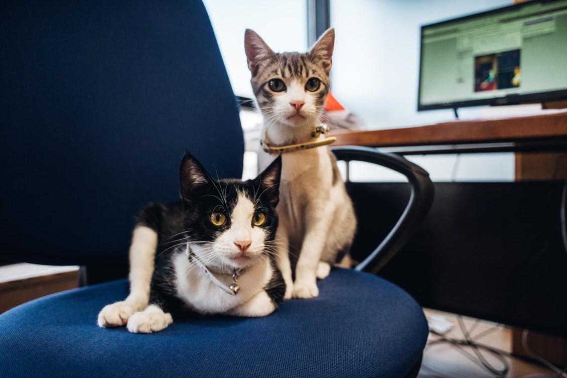 c7c2095a5 Queremos animais a fazerem-nos companhia também no escritório ...
