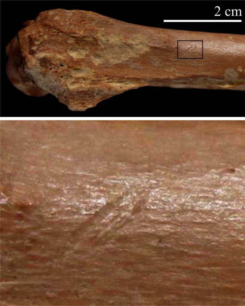 Resultado de imagem para Ferramentas de pedra indicam que os nossos antepassados chegaram mais cedo ao Norte de África