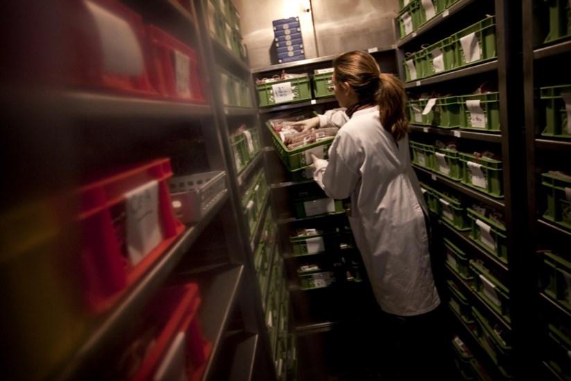 Resultado de imagem para Medicamentos derivados de plasma português ainda não estão a ser usados