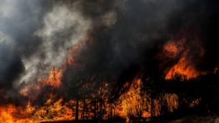 A Câmara de Oleiros pediu que a família do trabalhador fosse ressarcida com os mesmos apoios das restantes vítimas dos incêndios