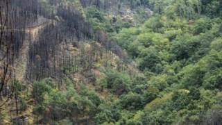 Os guardas-florestais vão ajudar a proteger a floresta, incluindo dos incêndios