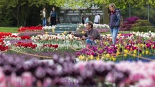 Campos de tulipas têm vedações que impedem os turistas de caminhar no meio das flores