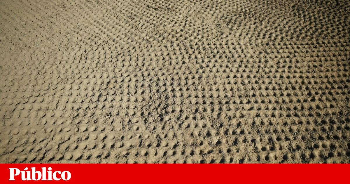 Destruição do solo no Alentejo é galopante e só o adubo orgânico a pode parar