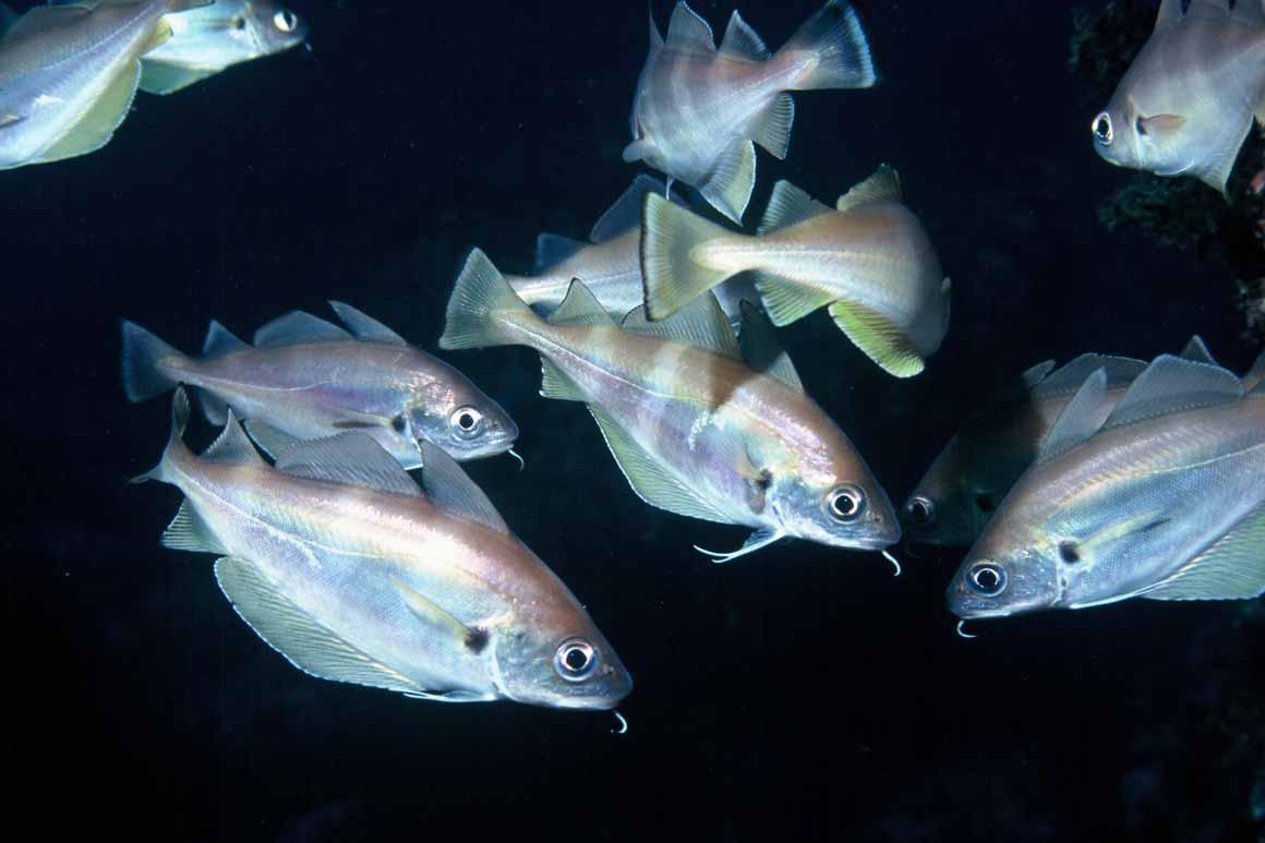 Cientistas têm vindo a estudar nos últimos anos os efeitos do parque marinho