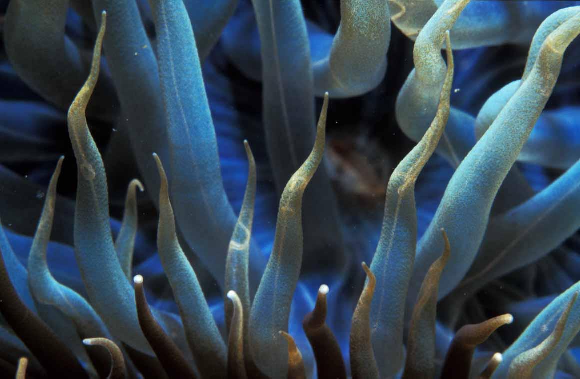 Estendendo-se por 38 quilómetros entre o Cabo Espichel e o Portinho da Arrábida, o parque tem uma rica biodiversidade marinha