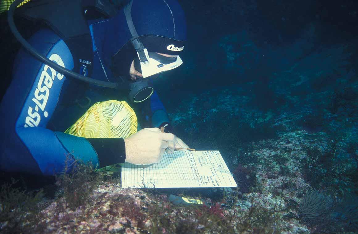 Mergulhadores realizam contagens de peixes em diversas áreas