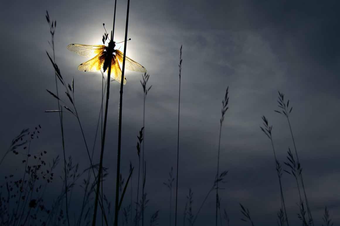 """""""Sonnehaft"""": vencedor na categoria Outros Animais"""