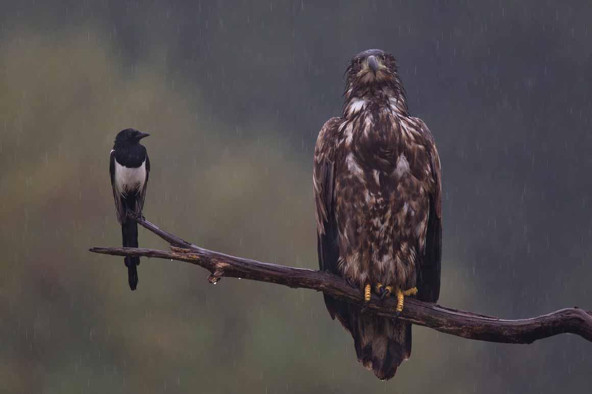 """Mieses Wetter"": terceiro lugar na categoria Aves"