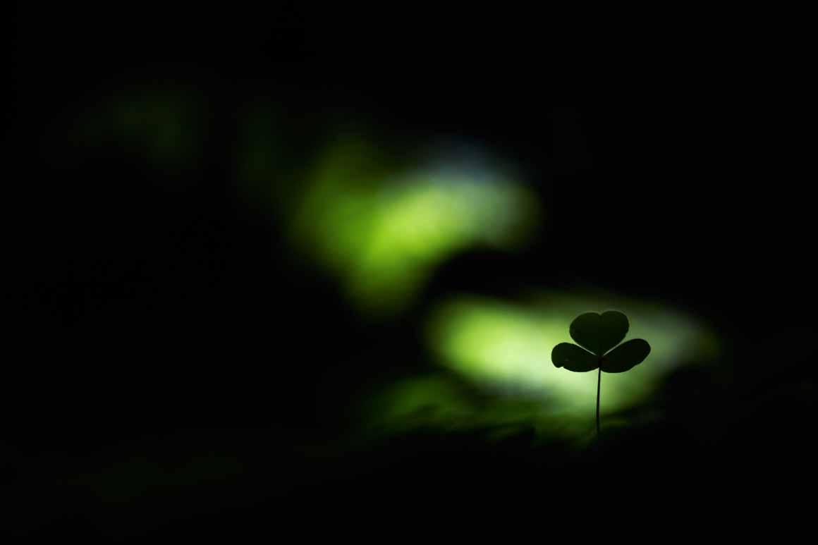 """""""Spotlight im Wald"""": vencedor na categoria Plantas e Fungos"""