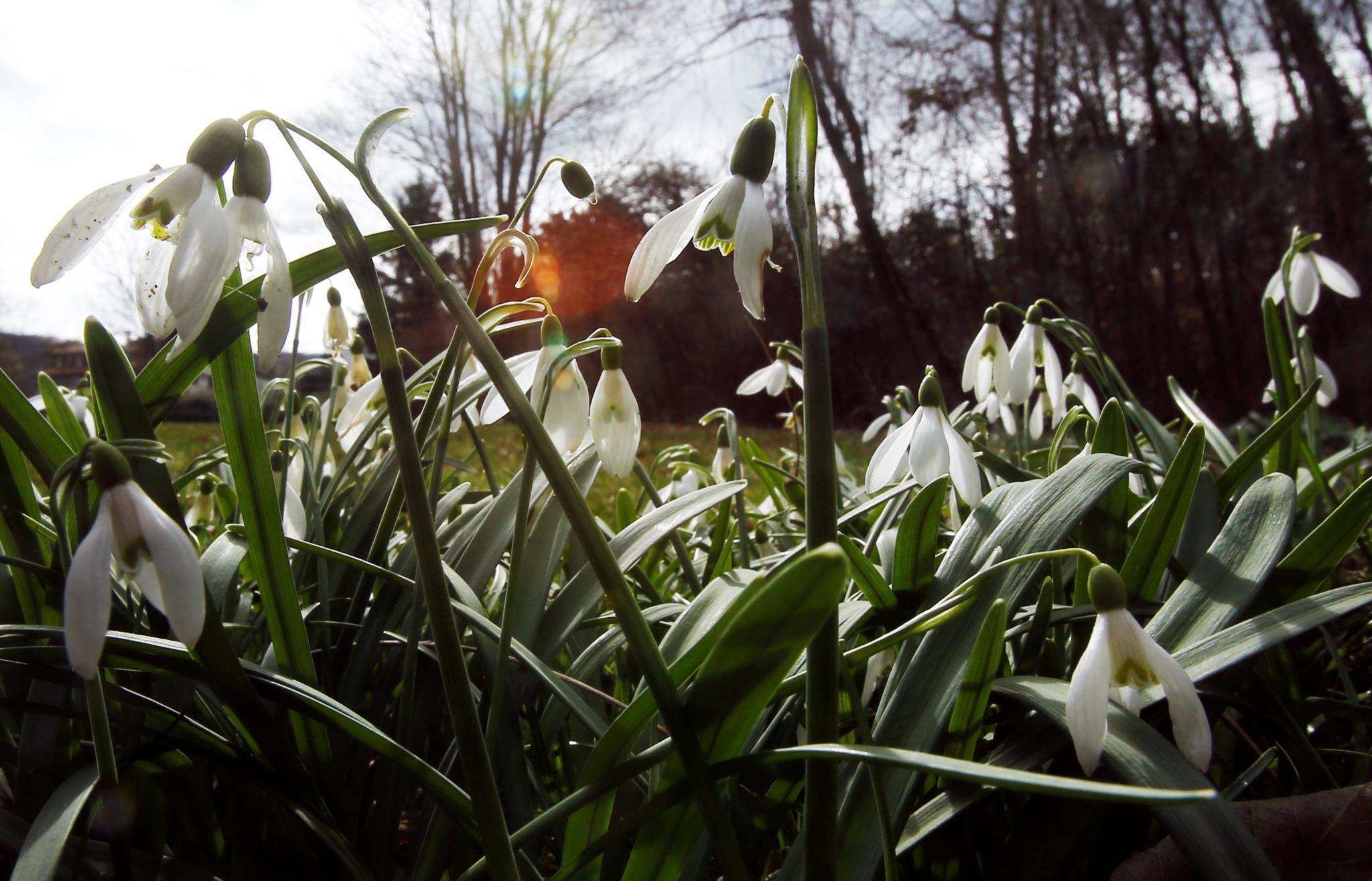 Flores em Weidling, na Áustria