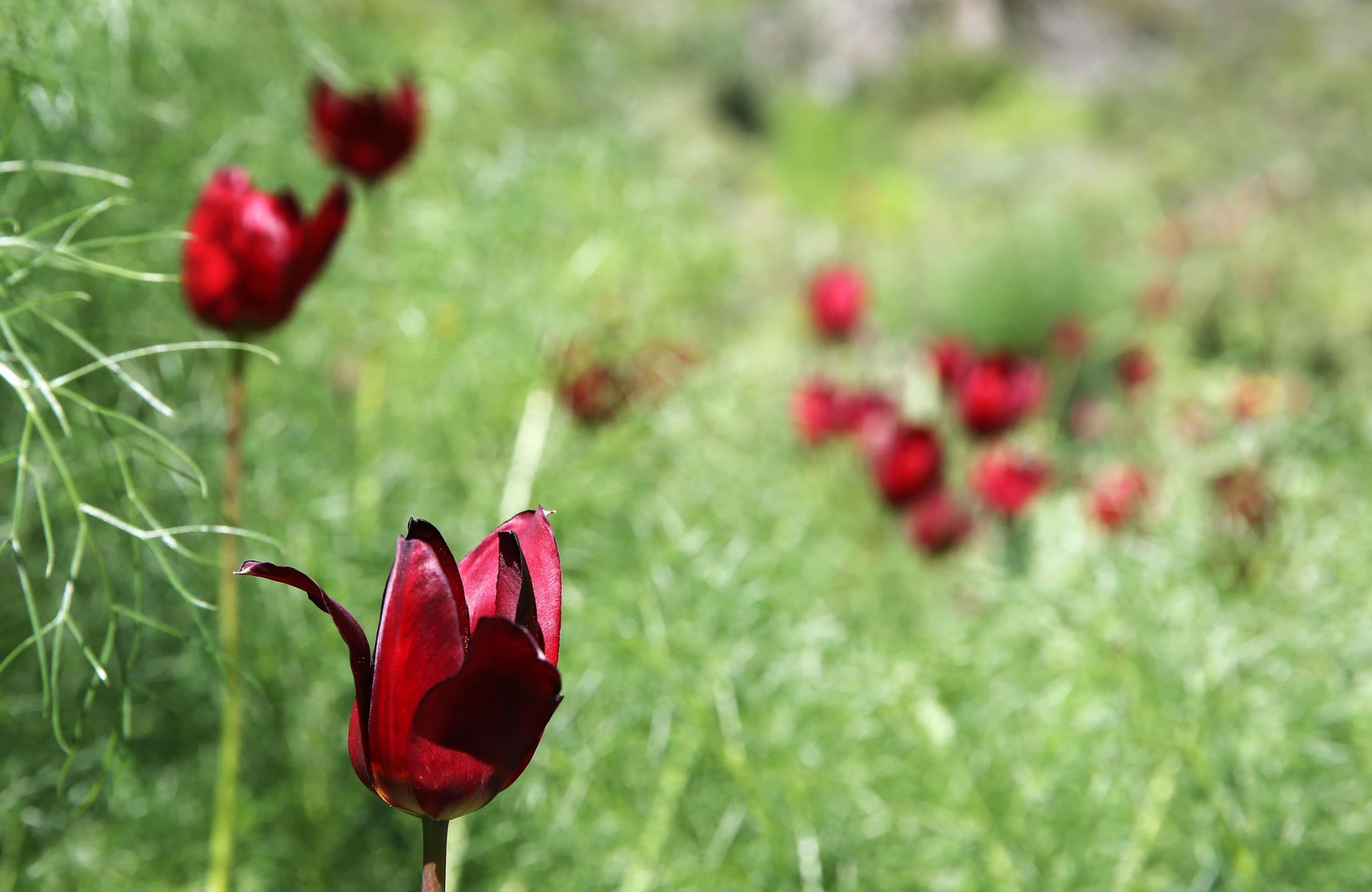 O primeiro dia de Primavera em Chipre