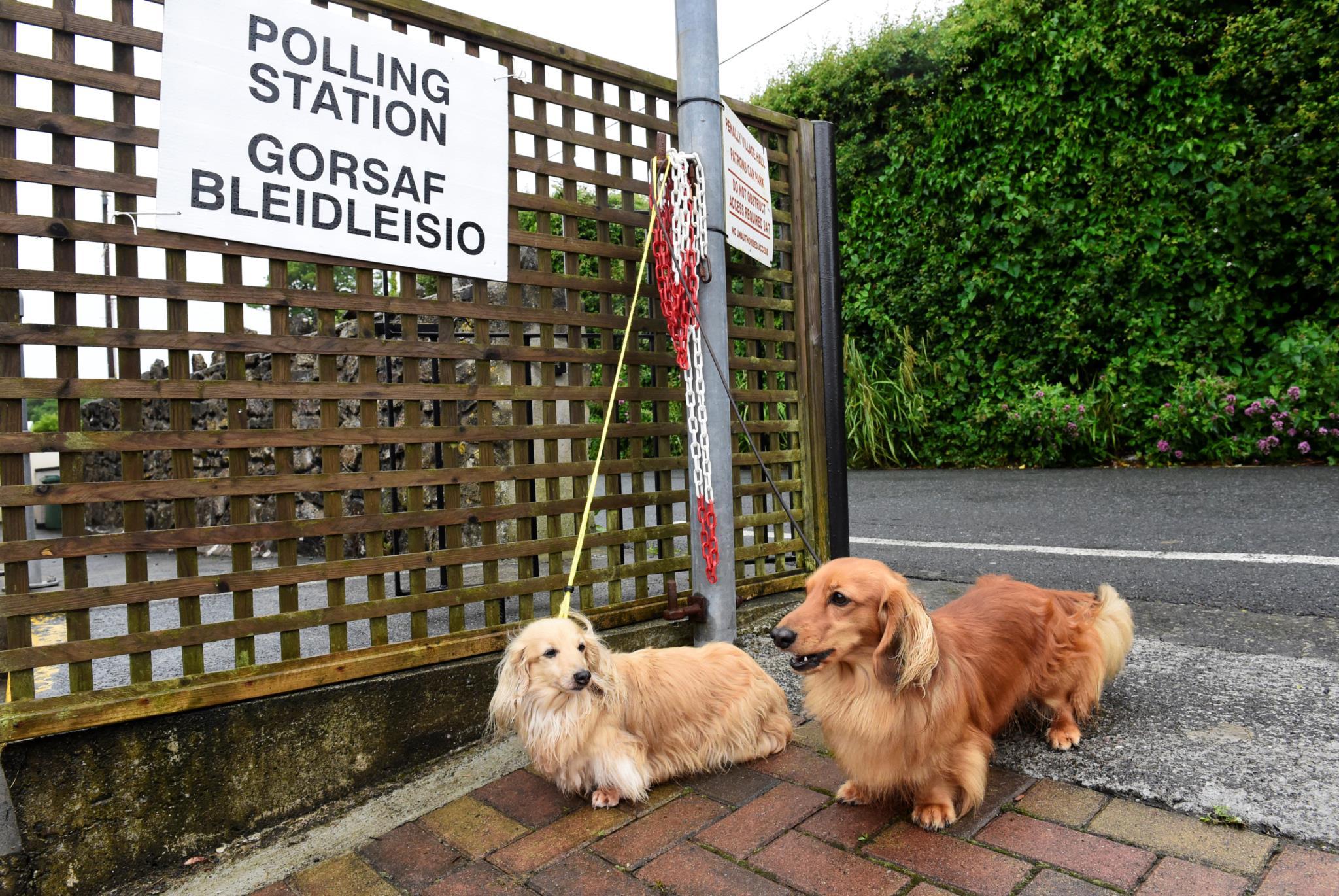 Dois cães aguardam pelo dono, no exterior de uma assembleia de voto no País de Gales