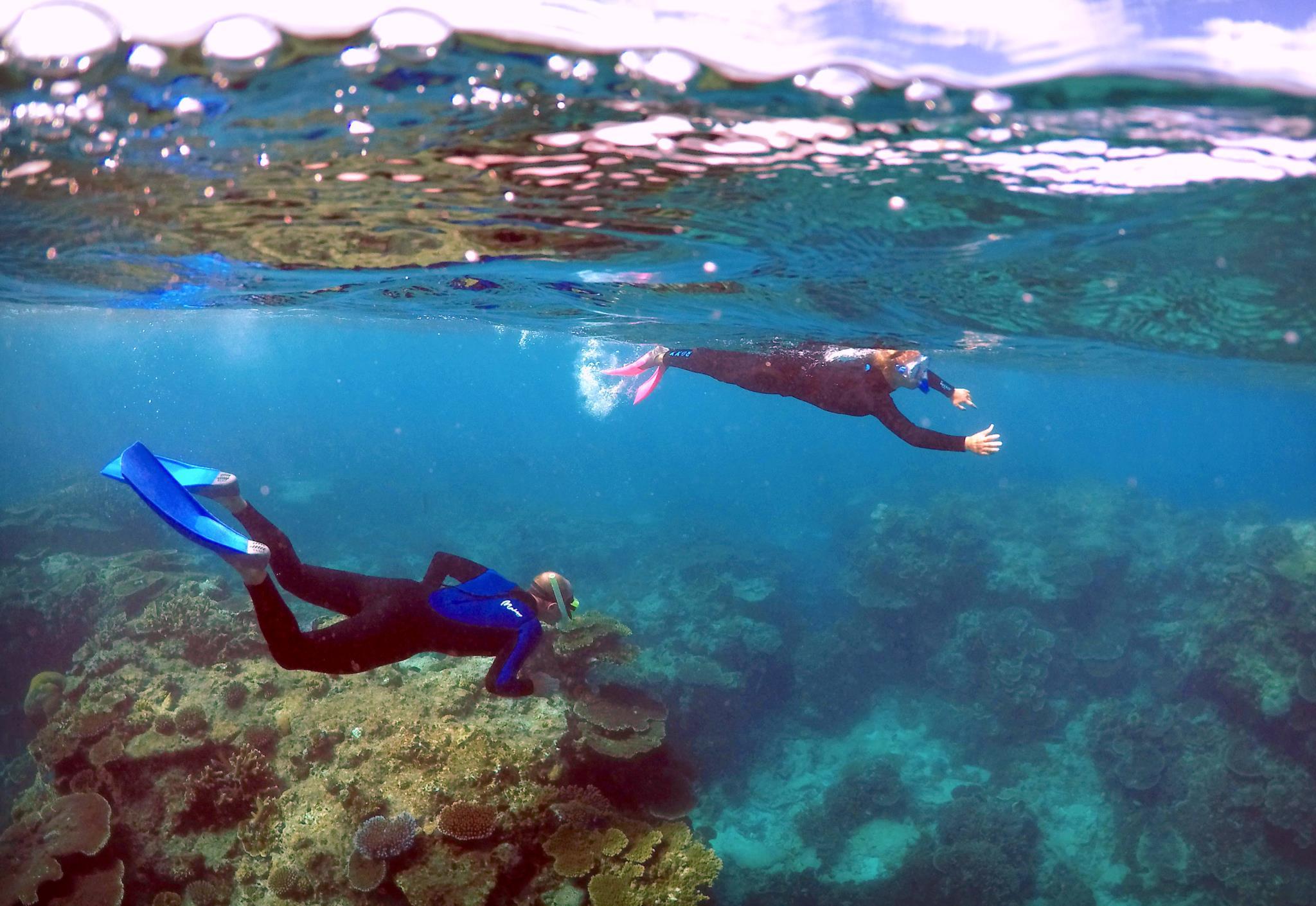 Turistas fazem snorkel em Queensland, Austrália