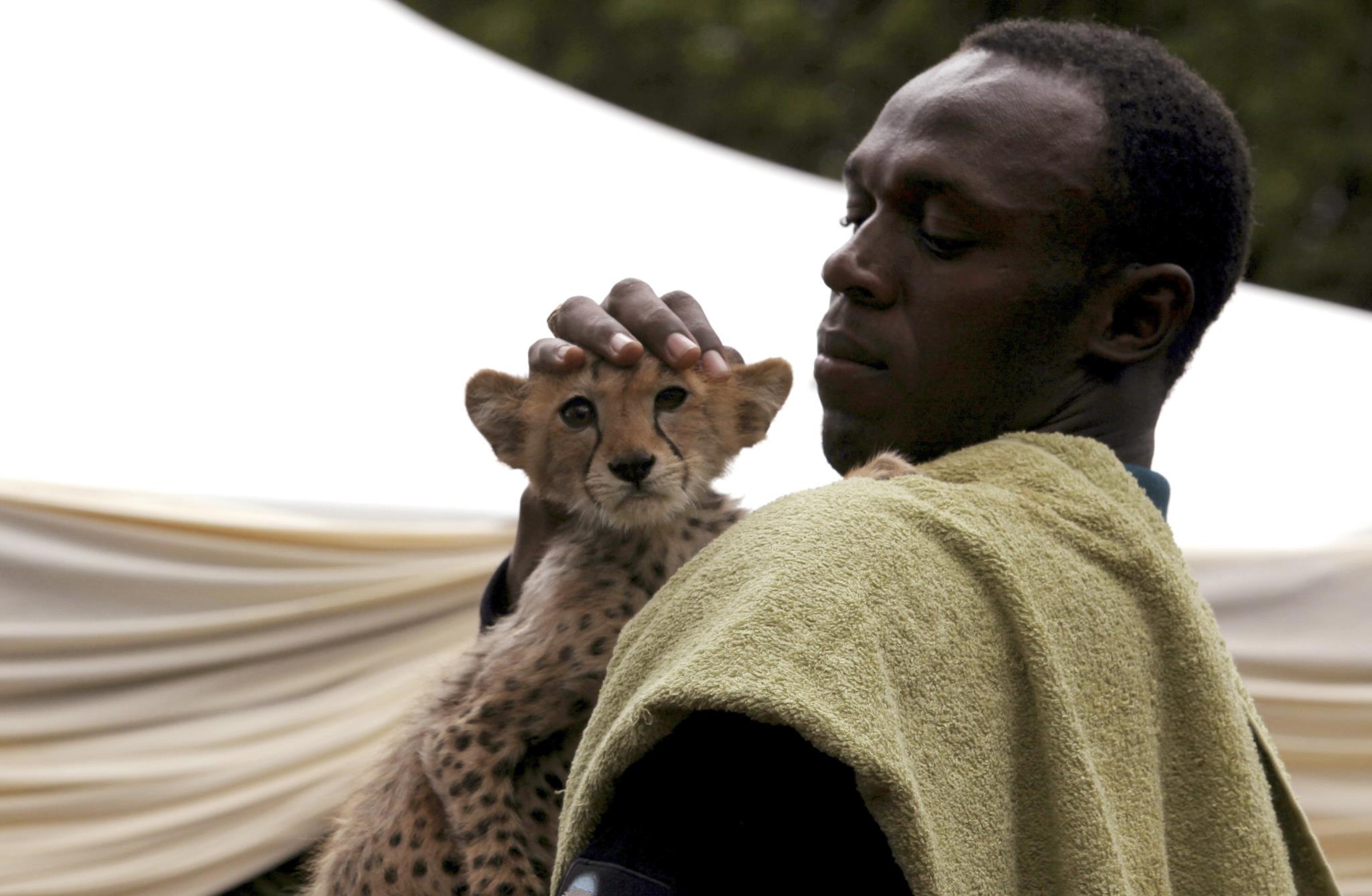 """Em 2009, Bolt, o """"homem mais veloz do mundo"""" adoptou no Quénia o animal mais veloz do mundo, uma chita, baptizando-a de """"relâmpago""""."""