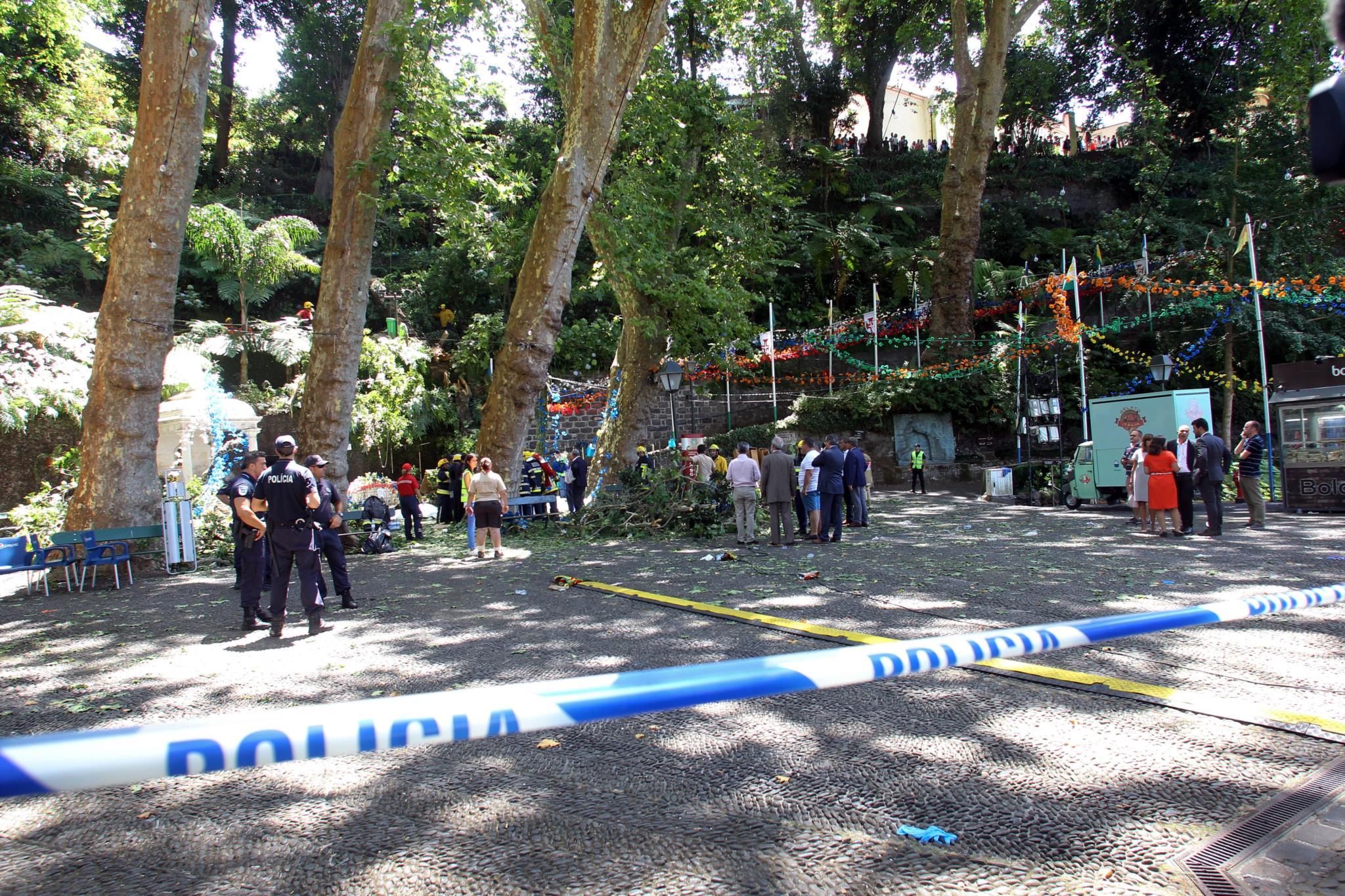 Junta de Freguesia avisara já em 2014 para o risco das árvores centenárias 601281?tp=KM&db=IMAGENS