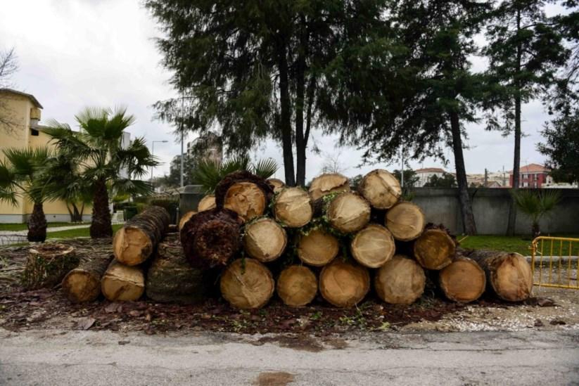 2a1aa820159 As palmeiras ainda podem ganhar a guerra contra o escaravelho-vermelho