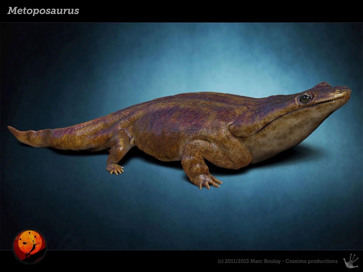 Antepassado monstruoso das salamandras descoberto no Algarve