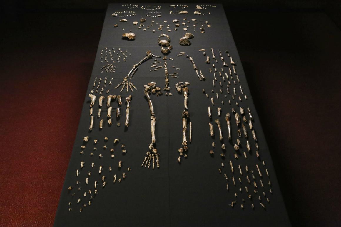 Bem-vindo, <i>Homo naledi</i>!